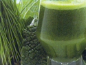 Omega Cube Juicer Makes Wheatgrass and Green Juice