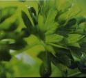 The Omega Cube Minces Herbs